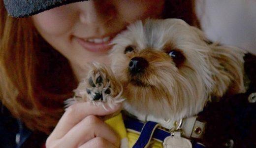 定期的に開催すると楽しい♪愛犬の撮影会