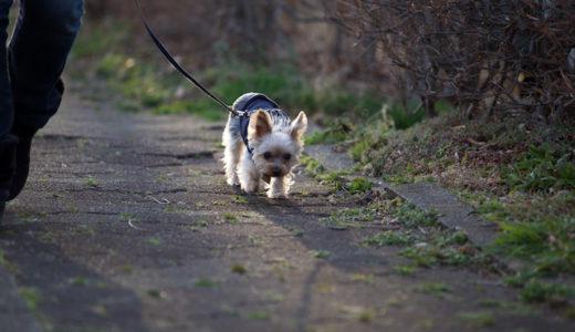 愛犬とのお散歩を楽しむための工夫