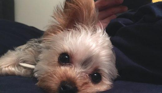 愛犬が命を落としかけたロキソニン事件