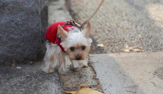 犬のフン問題