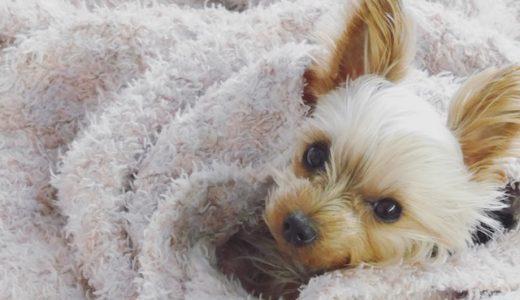 怖がりな愛犬に安心して過ごしてほしい!ペットホテル奮闘記