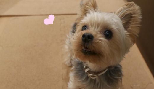 【4/26締切!!】誰でも犬猫たちを助けるチカラになれる!