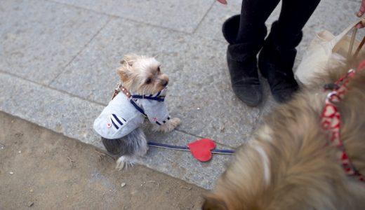 犬嫌いな愛犬のための挨拶トレーニング
