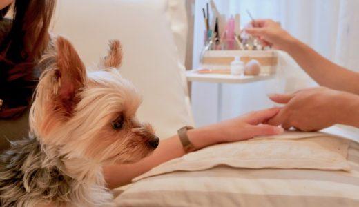 愛犬と一緒にネイルサロンへ♪