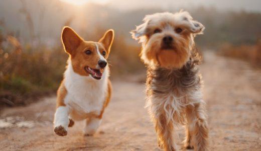 動物愛護法がついに改正!2019年の改正点をわかりやすく