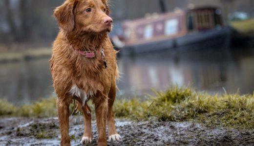 災害が起きたとき、ペットと一緒に避難できるの?