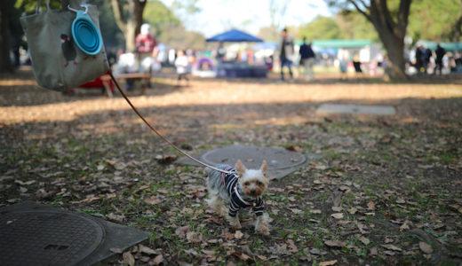 犬連れOK!広大な水元公園で愛犬とバーベキュー♪