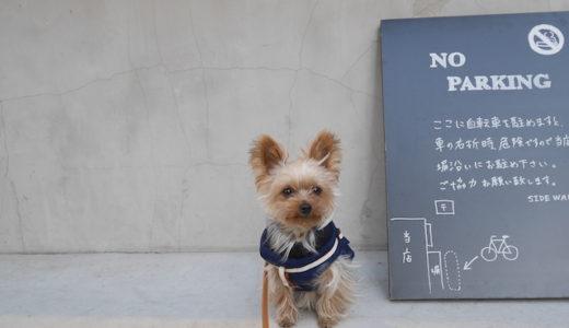 愛犬に暖かいダウンを着せてみた感想と注意点