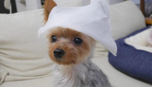 【使いやすさ◎】お気に入りの犬用ウェットティッシュをご紹介します✨