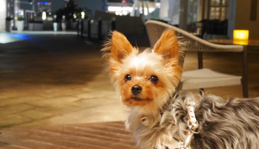 お台場のヒルトンホテルに愛犬とお泊まり♡